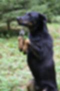 Éducation canine, chien à problème, chien dangereux, chien potentiellement dangereux, chien agressif, gestion du chien agressif, gestion du chien craintif, agressivité, chien peureux, chien craintif, stimuler l'intelligence de son chien, chien fugueur, chien chasseur, problème de rappel, fugue de chien, aboiement, anxiété de séparation, hurlement de chien, chien stresse en voiture, chien tire en laisse, chien qui urine partout, chien destructeur, chien mordeur, morsure de chien, chien a peur des enfants, chien a peur des gens, chien a peur des chiens, socialisation chien, école du chiot, clicker training, bien choisir son animal de compagnie, dog dancing, obé-rythméé, cours canin privé, éducateur canin, cours collectif, cours individuel, éducatrice canine, cours pour chien, école pour chien, cours de danse pour chien, sport plaisir, obédience, obéissance, concours canin, cours cynologique avancé, cours canin avancé, lausanne, cours chien à domicile, cours sur rendez-vous,
