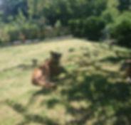 pension pour chien Lausanne, faire garder son chien Lausanne, garde de chien Lausanne, garderie chien Lausanne, pension famille chien Lausanne, pension sans boxe chien Lausanne,