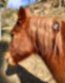 les pierres ca rassure les animaux, soigner les animaux par les pierres, lithothérapie pour chevaux, le cheval et les minéraux, poney, âne, cheval boiterie, montage solide pierre chevaux,