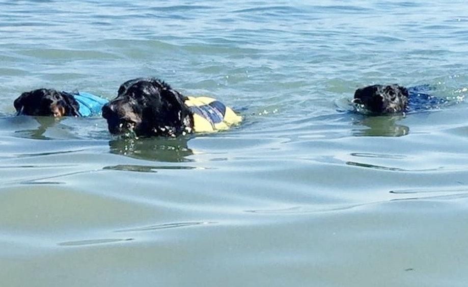 reiki animaux bien-être soin énergétique magnétisme guérisseur thérapie naturelle traumatisme chien difficile