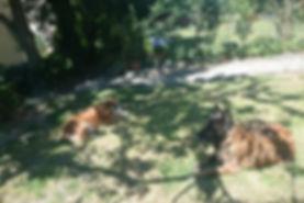 pension pour chien Lausanne, faire garder son chien Lausanne, garde de chien Lausanne, garderie chien Lausanne, pension famille chien Lausanne,