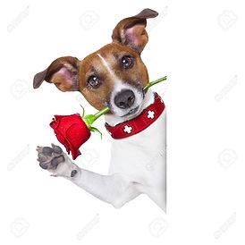 31536738-valentines-chien-avec-une-rose-