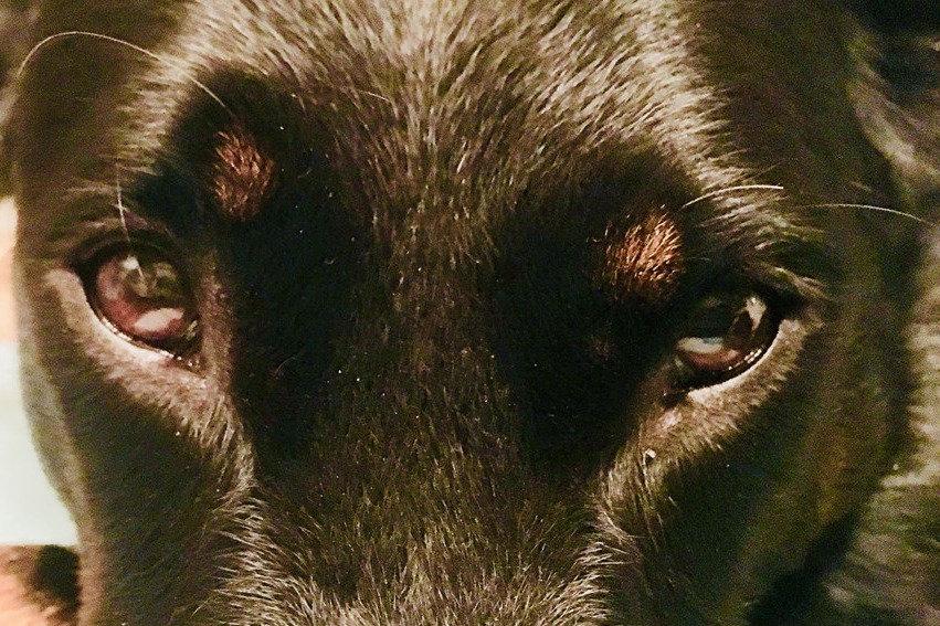 communication animale interprète animalier télépathie communication intuitive suisse chien animaux france belgique expert