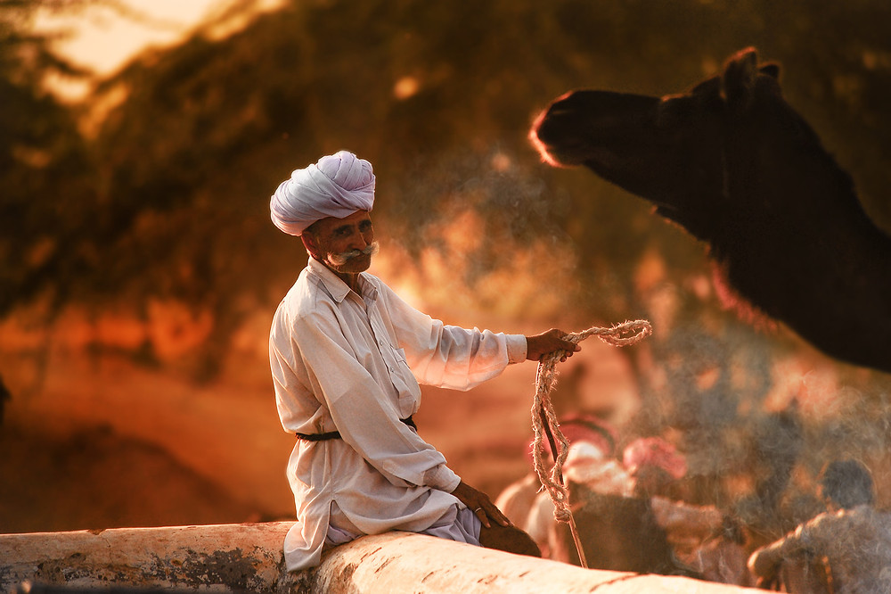 A Nomad and his camel. Pushkar Mela, Rajasthan - India. Picture by Runa Lindberg