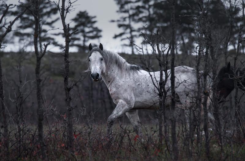 Fotoreise Bosnische Wildpferde14.jpg