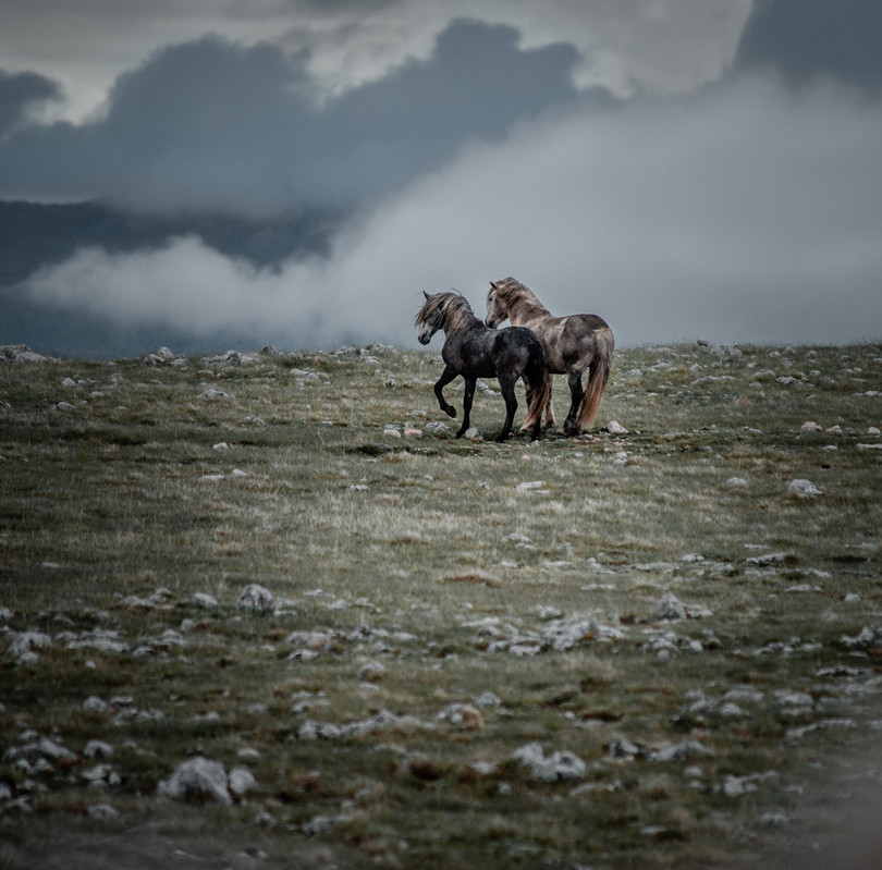 Fotoreise Bosnische Wildpferde7.jpg