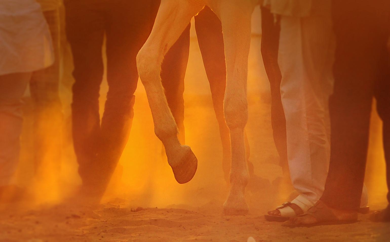 Horsesandhumans4.jpg