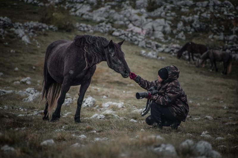 Fotoreise Bosnische Wildpferde20.jpg