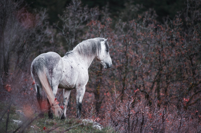 Fotoreise Bosnische Wildpferde10.jpg