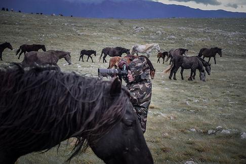 Fotoreise Bosnische Wildpferde1.jpg
