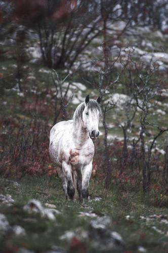 Fotoreise Bosnische Wildpferde12.jpg