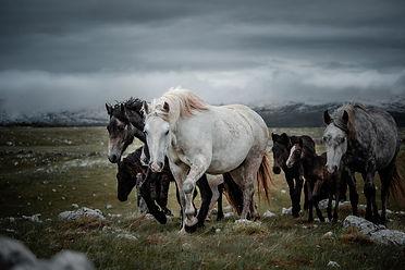 Fotoreise-Bosnische-Wildpferde21.jpg