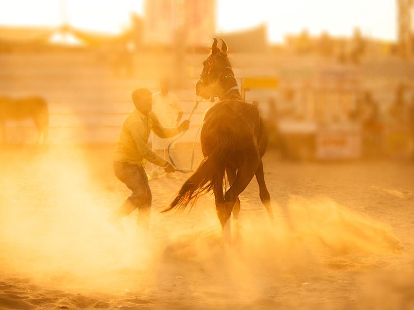 Horsesandhumans6.jpg