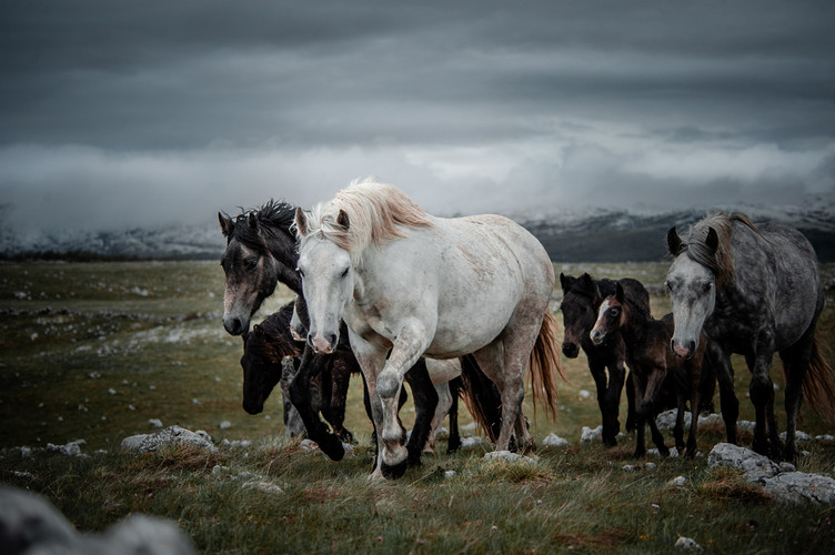 Fotoreise Bosnische Wildpferde6.jpg