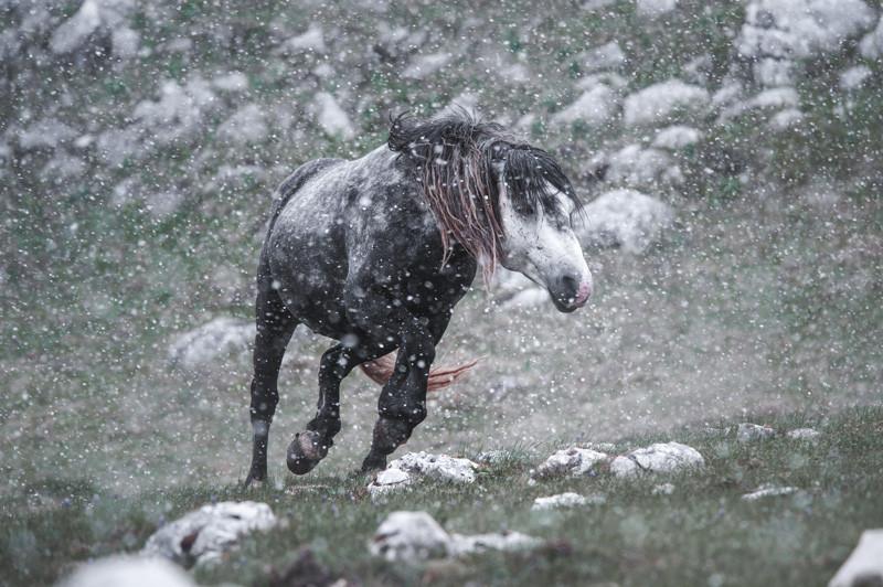 Fotoreise Bosnische Wildpferde18.jpg