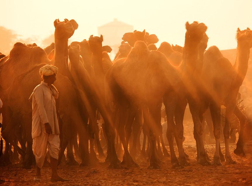 Pushkar Mela, Rajasthan, India. Picture by Runa Lindberg, Adventure In Focus, adventure-in-focus.com