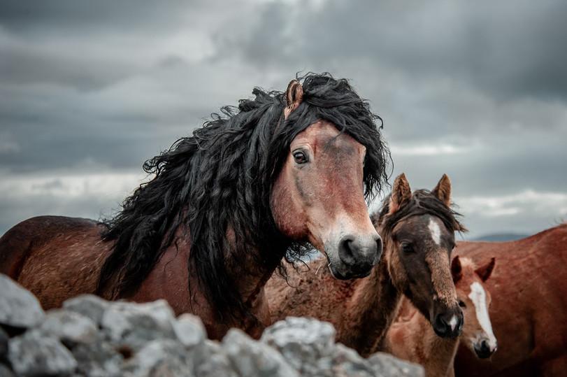 Fotoreise Bosnische Wildpferde5.jpg