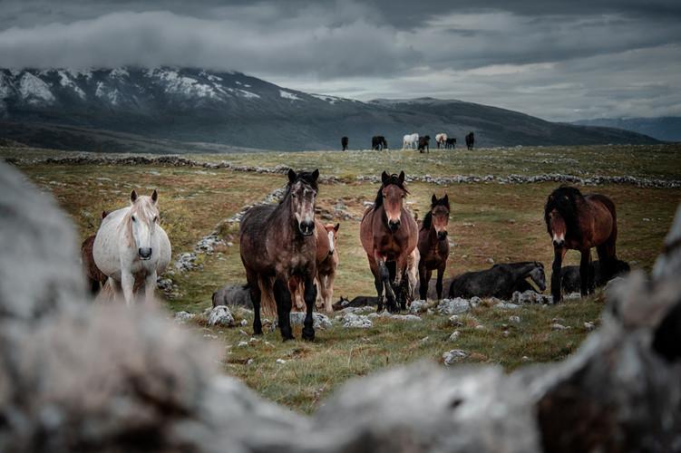 Fotoreise Bosnische Wildpferde3.jpg