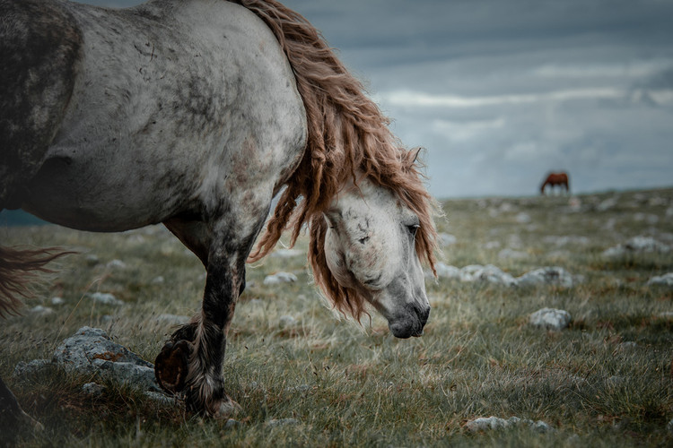 Fotoreise Bosnische Wildpferde19.jpg