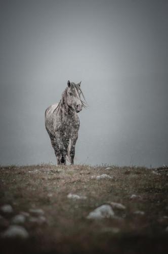 Fotoreise Bosnische Wildpferde13.jpg