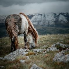 Bosnien Wildhorses, Livno
