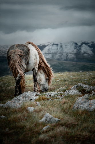 Fotoreise Bosnische Wildpferde8.jpg