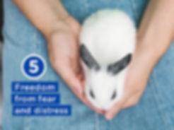 five-freedoms-05.jpg