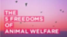 5-freedoms-animal-welfare.jpg