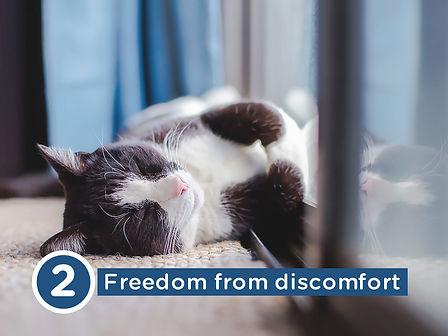 five-freedoms-02.jpg