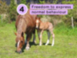 five-freedoms-04.jpg