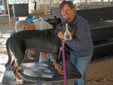 August 2013 Mensona Dog Show, Santa Rosa, CA