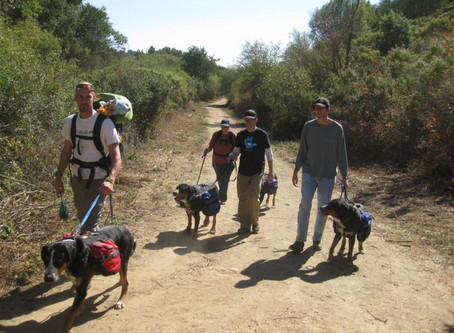 Pack Hikes - sign up & start training!