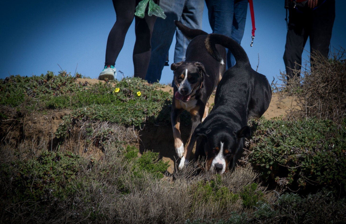 20160213_GGGSMDC Fort Funston (29 of 41)
