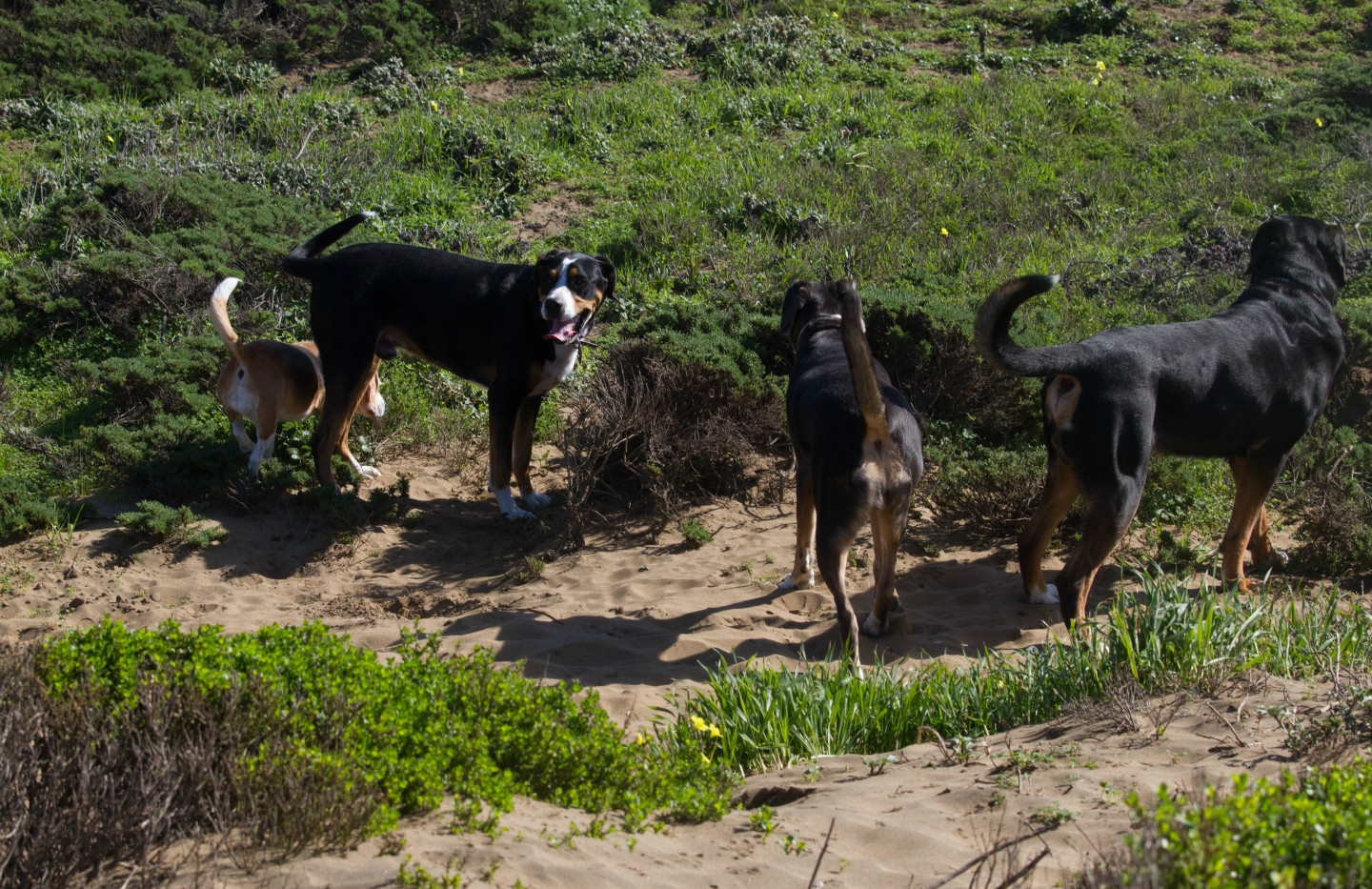 20160213_GGGSMDC Fort Funston (34 of 41)