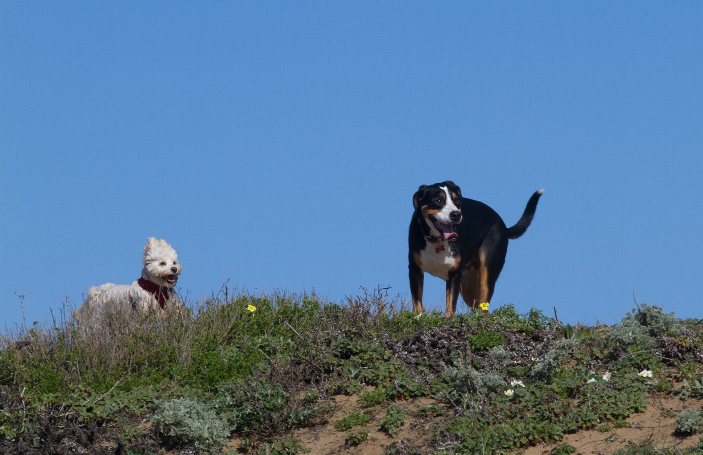20160213_GGGSMDC Fort Funston (30 of 41)