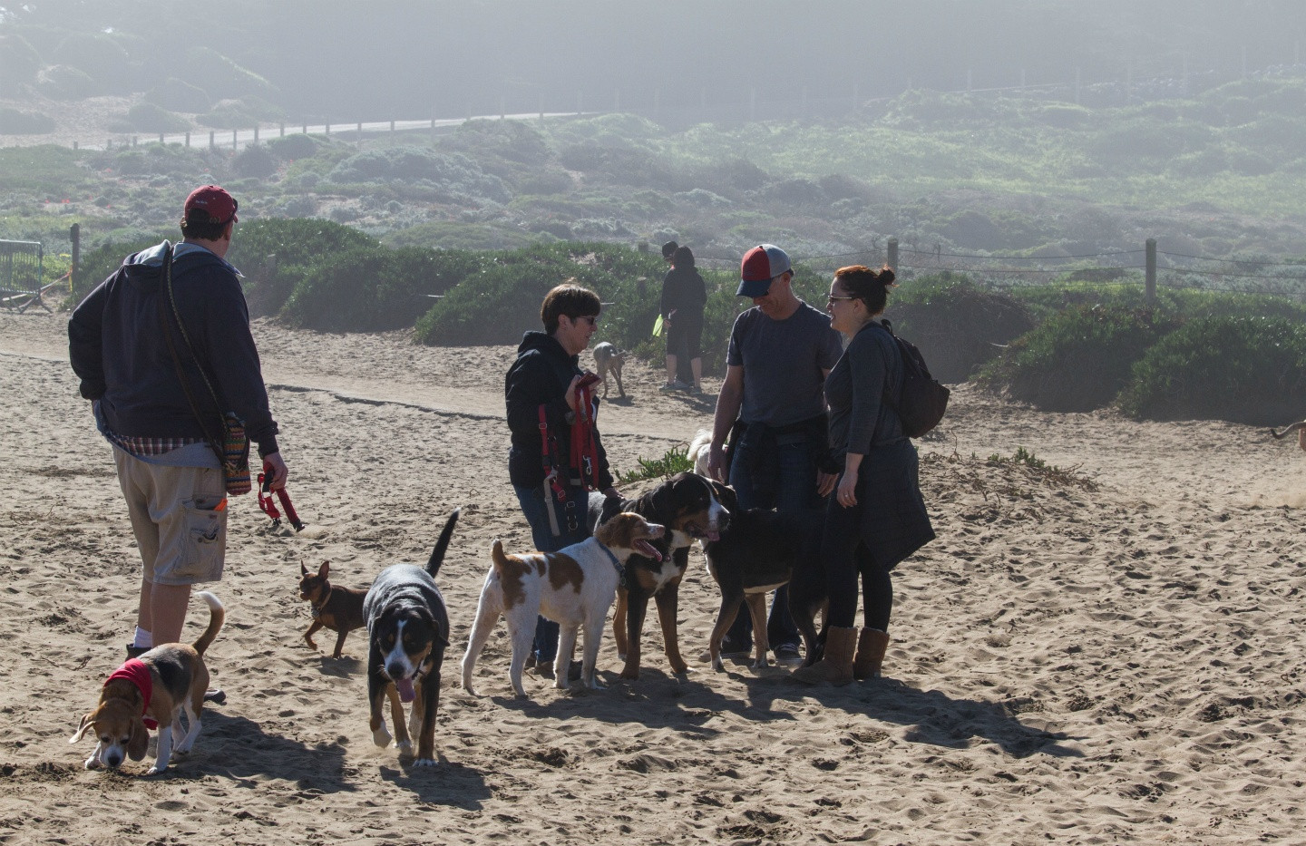 20160213_GGGSMDC Fort Funston (10 of 41)