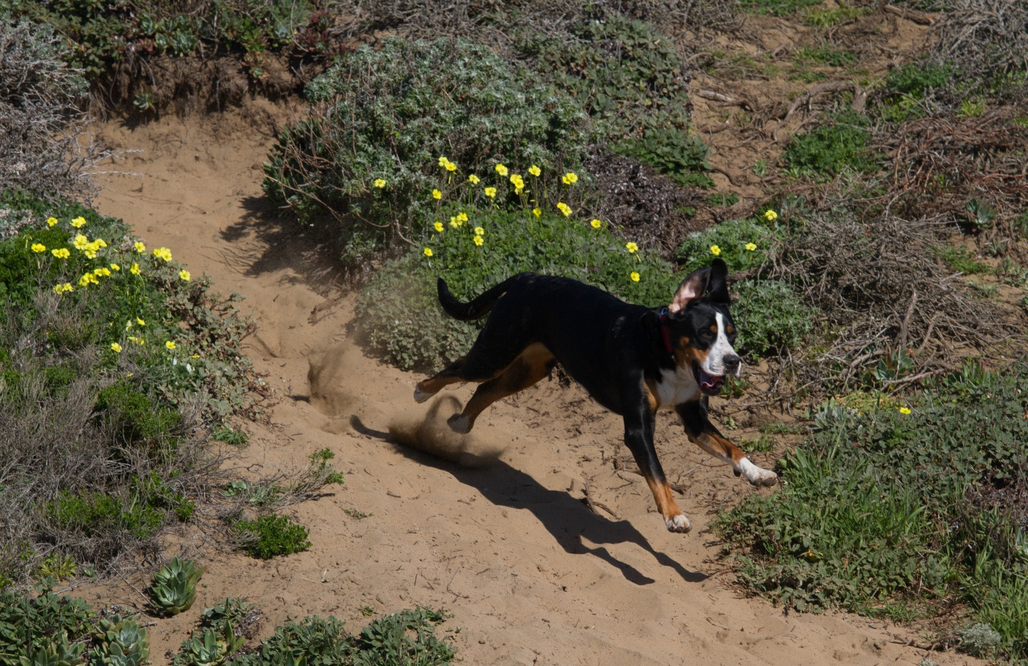 20160213_GGGSMDC Fort Funston (23 of 41)