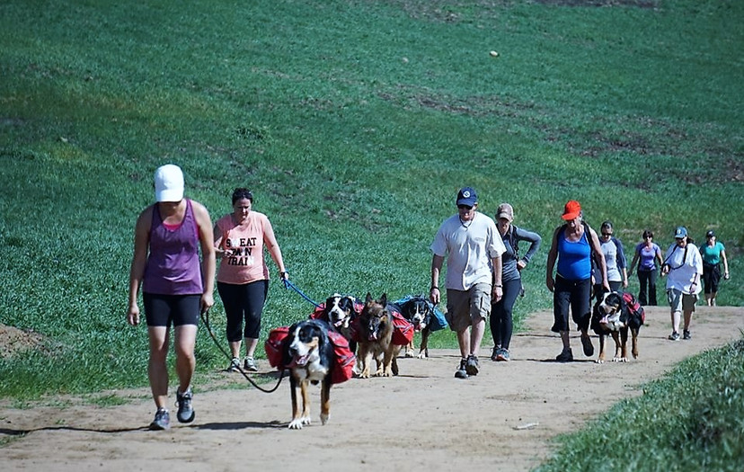 10-Hikers and packers.jpg