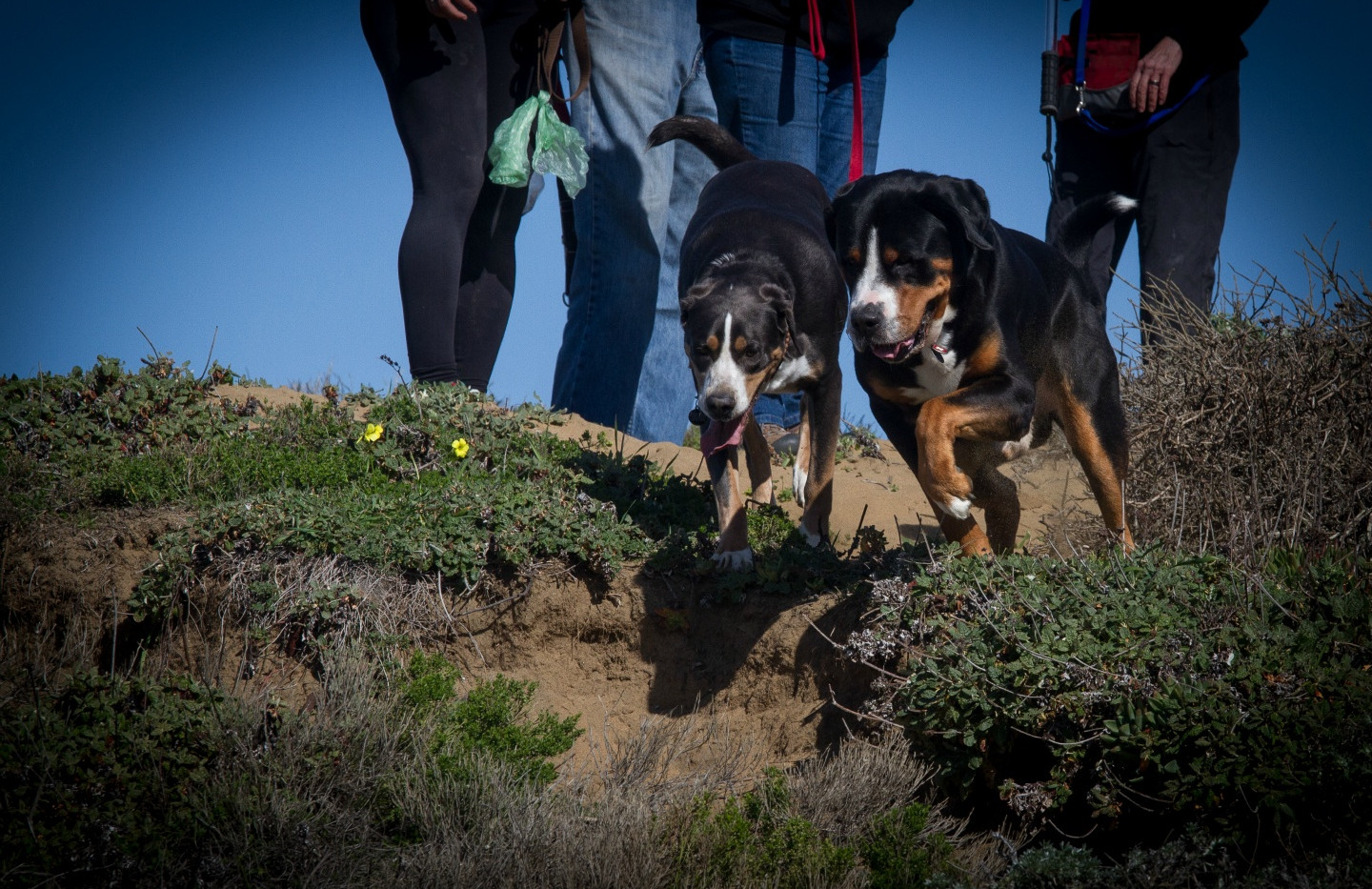 20160213_GGGSMDC Fort Funston (26 of 41)