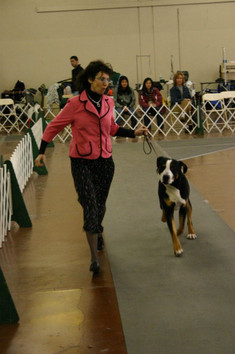 Santa Clara Kennel Club Show