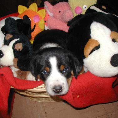 Puppies Gallery