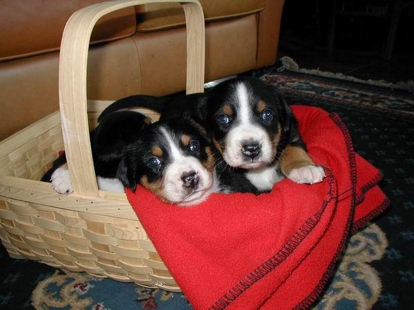 puppybasket.jpg