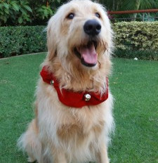 THE 12 DAYS OF CALVIN & SUSIE'S HOLIDAY GIFT GUIDE: DAY ONE – JINGLE BELL COLLARS!