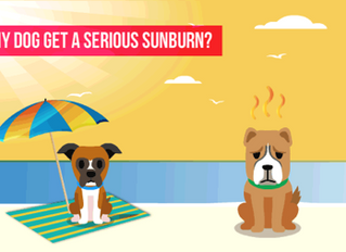 GUEST POST: CAN MY DOG GET A SERIOUS SUNBURN?