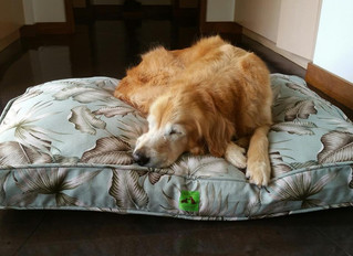THE 12 DAYS OF CALVIN & SUSIE'S GIFT GUIDE: DAY THREE – CALVIN & SUSIE ALOHA PET BEDS