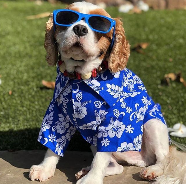 Image result for dogs wearing spring clothes