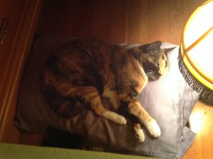 A CAT'S TALE…WITH BRANDY