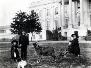 THE MOST UNUSUAL PRESIDENTIAL PETS