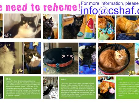 CSHAF・猫ちゃんたちの家を探しています