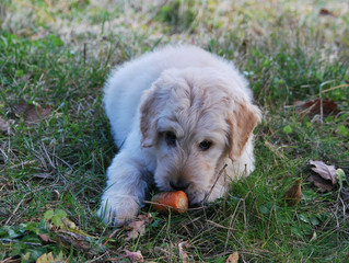 DO FRUITS AND VEGETABLES BELONG IN A DOG'S DIET?